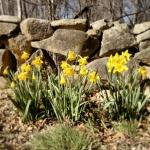 Feeling Spring