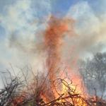 Brush Fire Plume