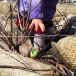 Easter Egg Hunt at Quitsa Pond