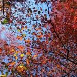 Under a Fiery Canopy