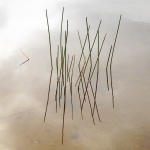 Lake Grass 2
