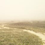 Aquinnah Fog