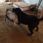 Worksite Pups